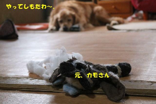 IMG_9708.jpg