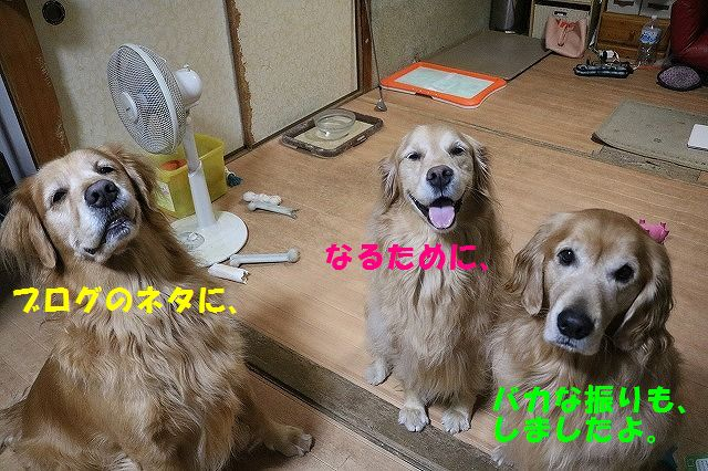 IMG_9788.jpg