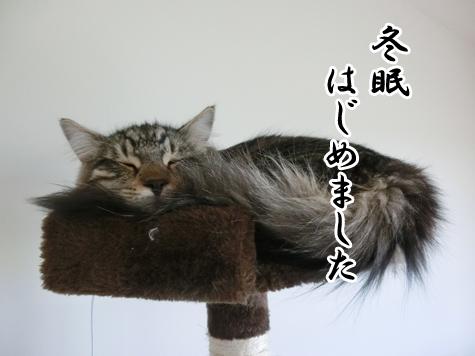 羊の国のラブラドール絵日記シニア!!「去りゆく夏とともに」5