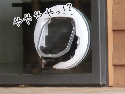 羊の国のラブラドール絵日記シニア!!「はじめてのキャット・ドア」4