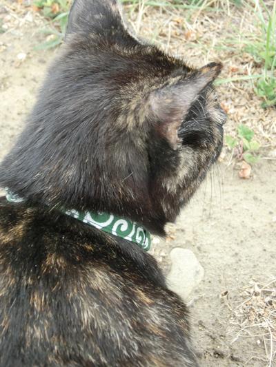 16032016_cat5.jpg