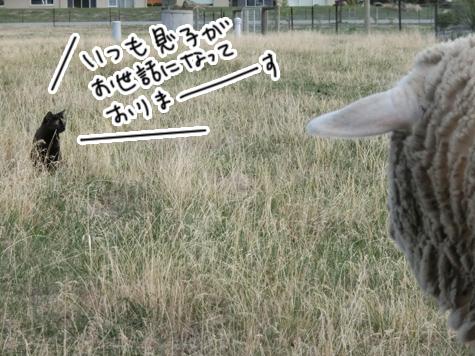 羊の国のラブラドール絵日記シニア!!「ファームとテオ母さん」8