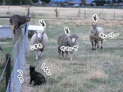 羊の国のラブラドール絵日記シニア!!「ファームとテオ母さん」3