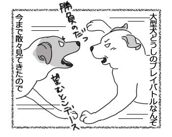 羊の国のラブラドール絵日記シニア!!「みんなのプレイバトル」1