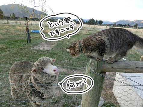 羊の国のラブラドール絵日記シニア!!「病欠届け」1