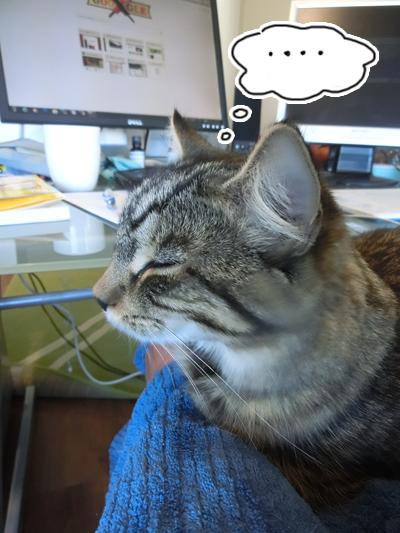 31032016_cat3.jpg