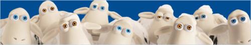 sheep500.jpg