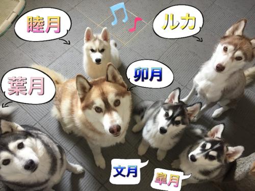 札幌の家族IMG_8255 のコピー
