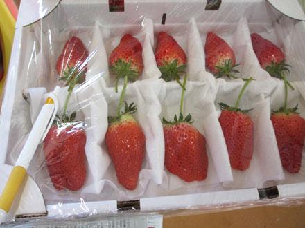 ジャンボ苺