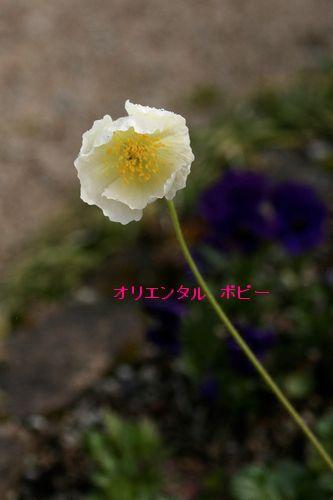 _MG_5190.jpg