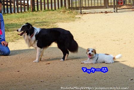 151023_yuasa14.jpg