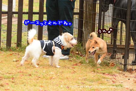 151102_yuasa10.jpg