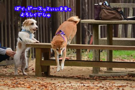 151106_yuasa15.jpg