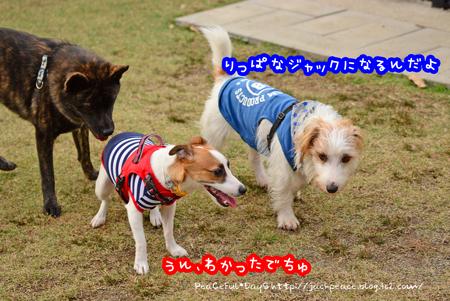 151122_yuasa32.jpg