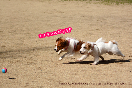 160315_yuasa77.jpg