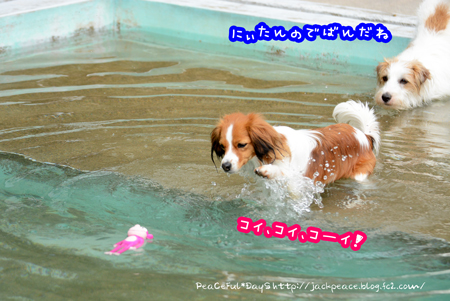 160406_pool2.jpg
