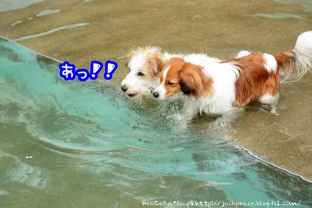 160406_pool4.jpg