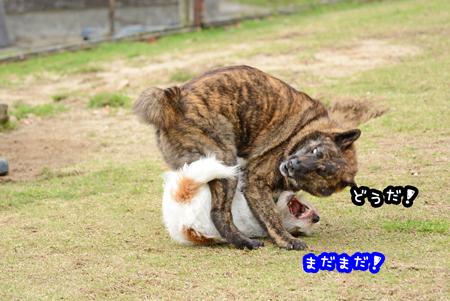 160408_yuasa20.jpg