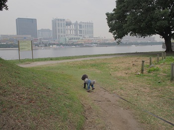 お台場さんぽ20151010-5