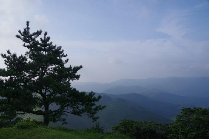 一本の木と連なる山々