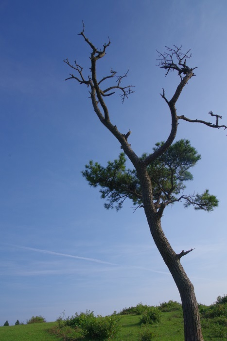 名もなき木