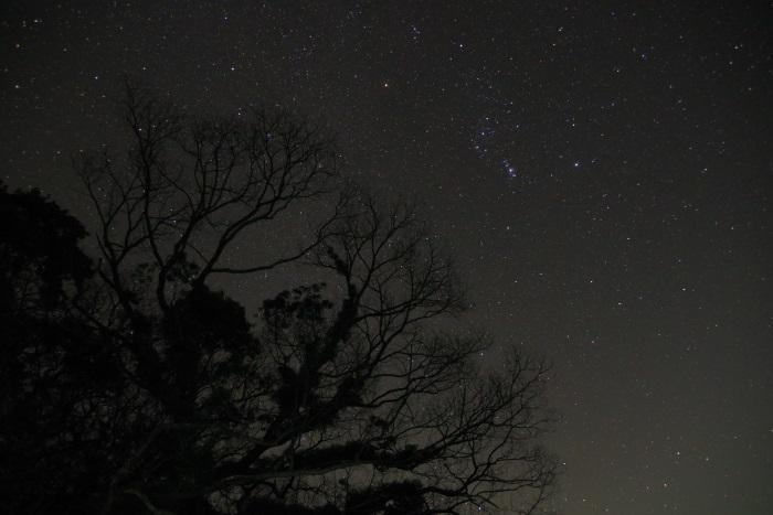 クスの木と星空