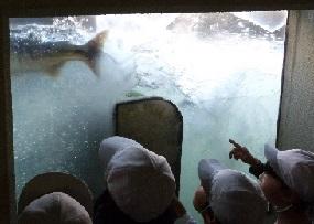 2013年11月8日③ 大堰自然の観察室