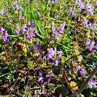 ⑤紫色の小さい花