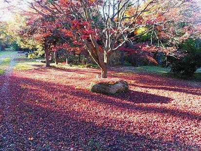 ⑤20151112安曇野落ち葉
