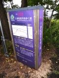 JR桔梗駅 赤松並木を歩く道