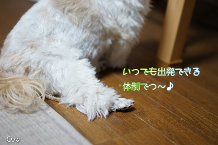 11-19_5280.jpg