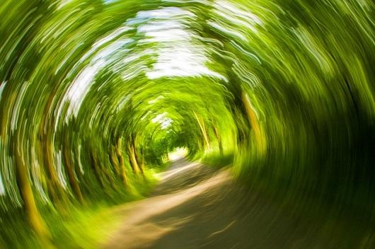 trees-358418_6401.jpg