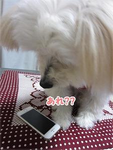きらさんと携帯1