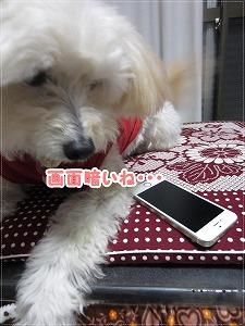 きらさんと携帯2