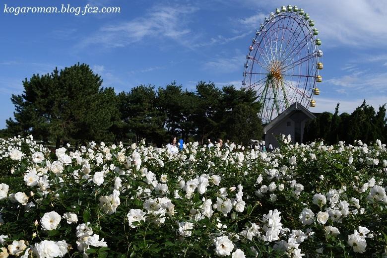 大観覧車と秋のバラ