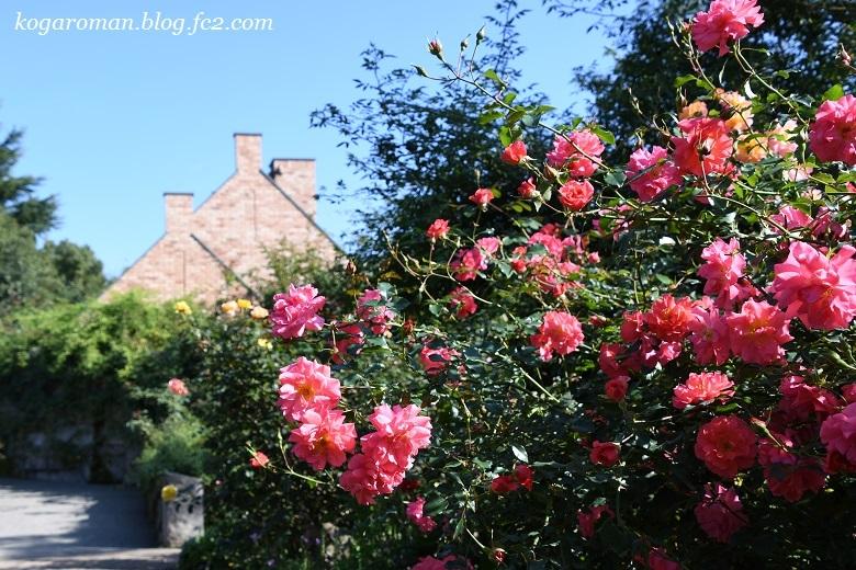 トレジャーガーデンの秋バラ5