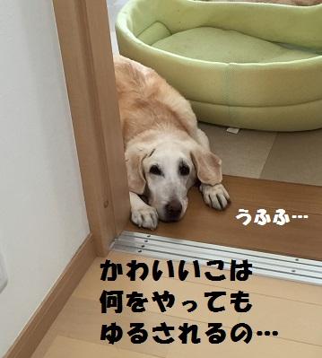 201603264.jpg