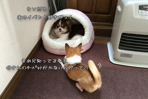 IMG59120401.jpg