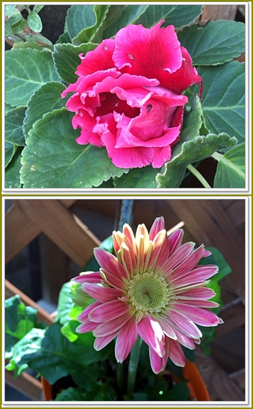 二度目の花