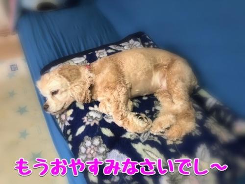もうおやすみなさいでし