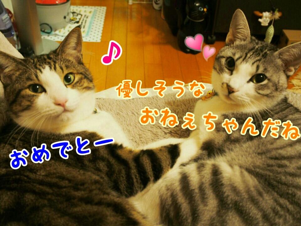 fc2_2015-11-29_19-49-29-722.jpg