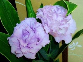 160321_3842「彼岸」と「月忌参り」に買った薄紫の花VGA