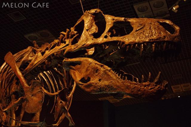 国立科学博物館恐竜博201603b