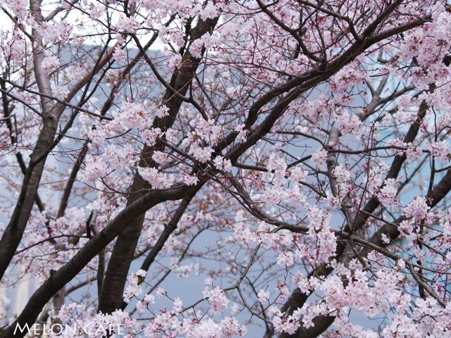小石川後楽園06