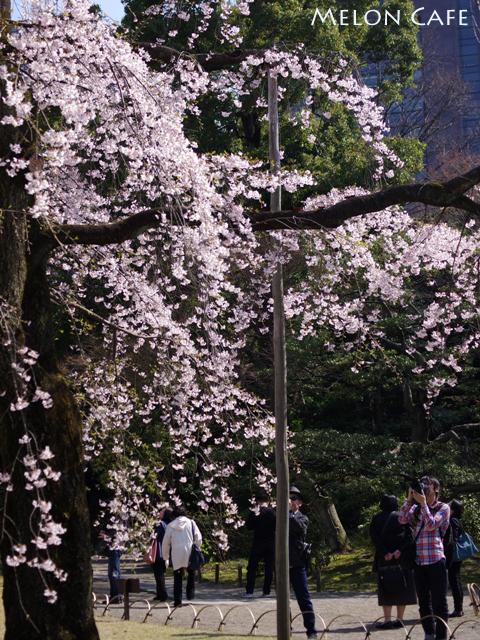 小石川後楽園04