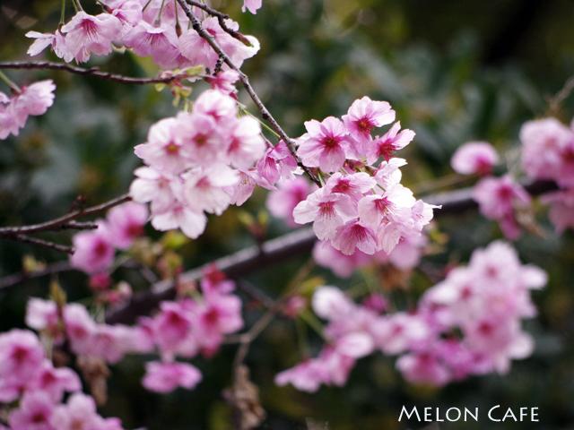 小石川後楽園03