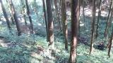 20151012水神さん葛山城跡102