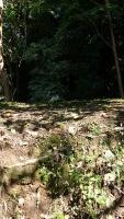 20151012水神さん葛山城跡158