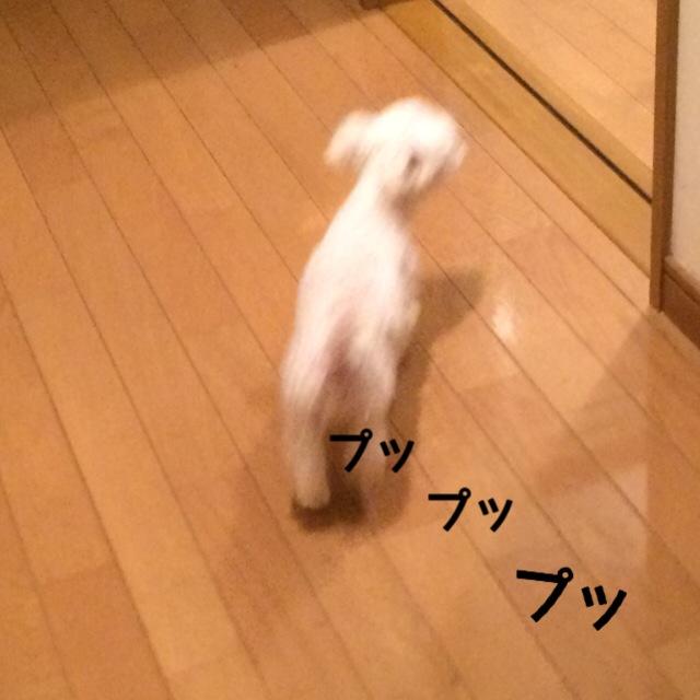 151031_9.jpg
