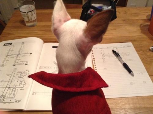 一緒に勉強中